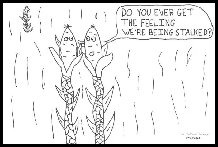 Corn - Stalked