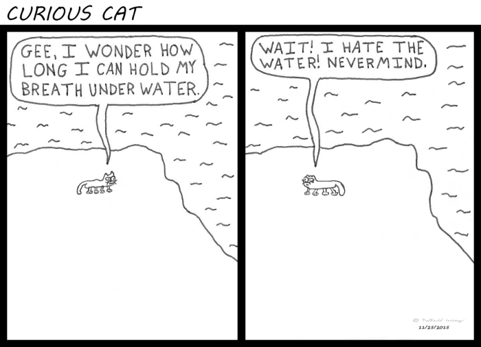 Curious Cat - Hates Water