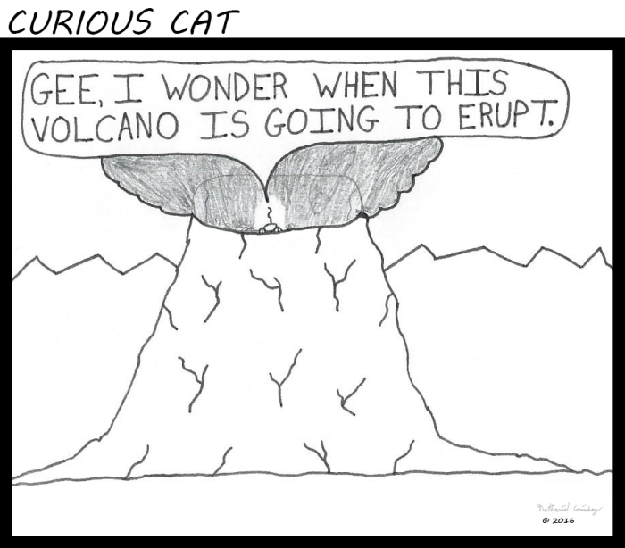 Curious Cat - Volcano