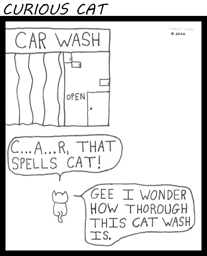 Curious Cat - Cat Wash