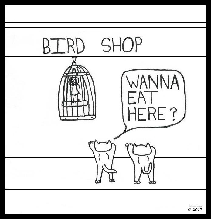 Cats Eat at Bird Shop