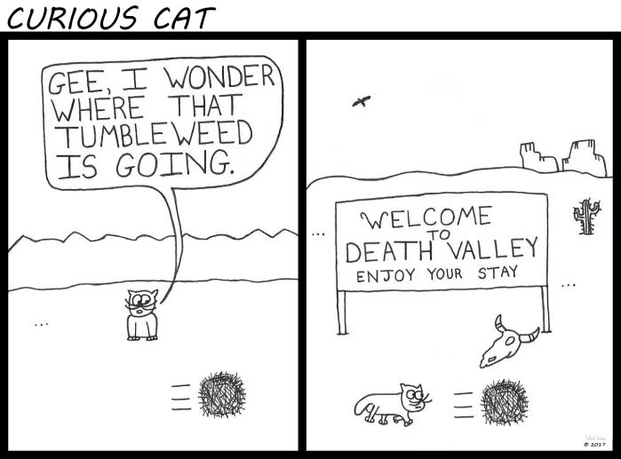 Curious Cat - Tumbleweed