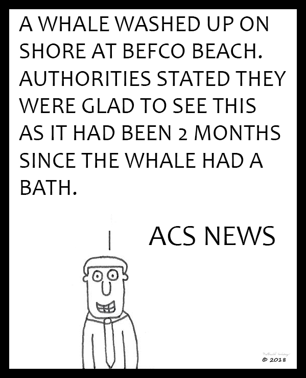 ACS News - Whale Washed Up On Shore