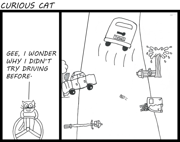 curious cat - driving